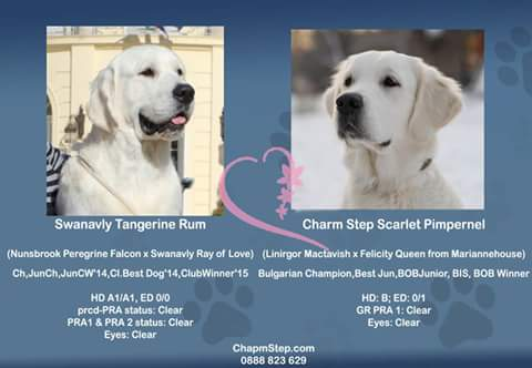 Litter Charm Step golden retrievers